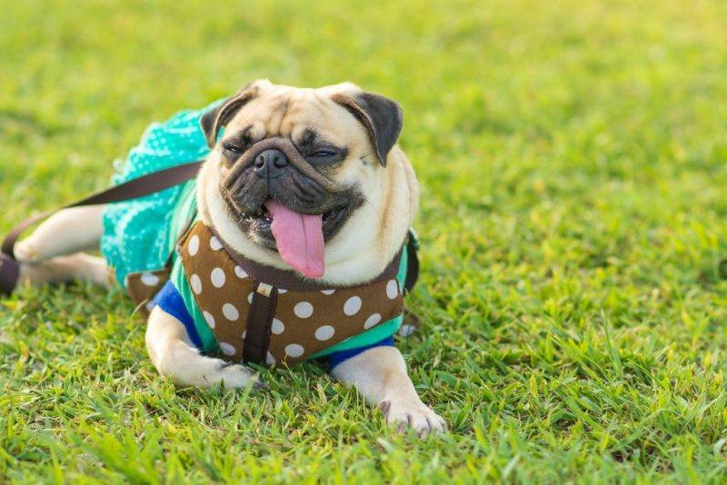 The Daily Fluff | Pet Fashion | Winter Fashion Looks | Jackets for dogs | Cat Fashion | Dog Fashion | Melbourne Pet Blog