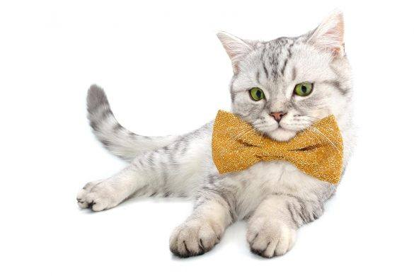 Pets | Spring Fashion Looks | Bow Ties | Dress Up Pets | Melbourne Pet Blog | The Daily Fluff