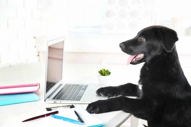 Pets | Workplace | Benefits of Pets | Office | Melbourne Pet Blog | The Daily Fluff