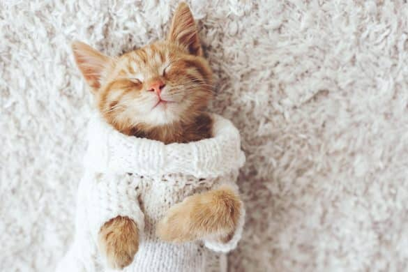 The Daily Fluff | Pets | Warm | Winter Tips | Pet Health | Melbourne Pet Blog