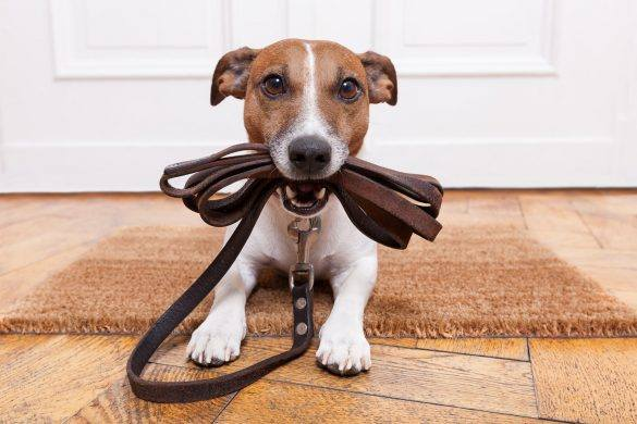 Obedience Training | Puppies | Train Your Dogs | Melbourne Pet Blog | The Daily Fluff