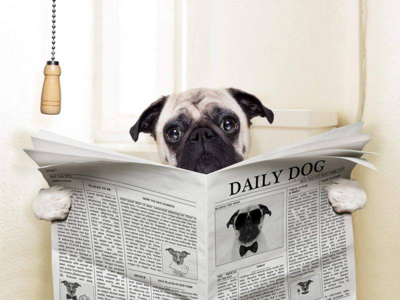 Easy Ways To Toilet Train | Puppy | Toilet Training | Pet Health | Pet Tips | Melbourne Pet Blog | The Daily Fluff