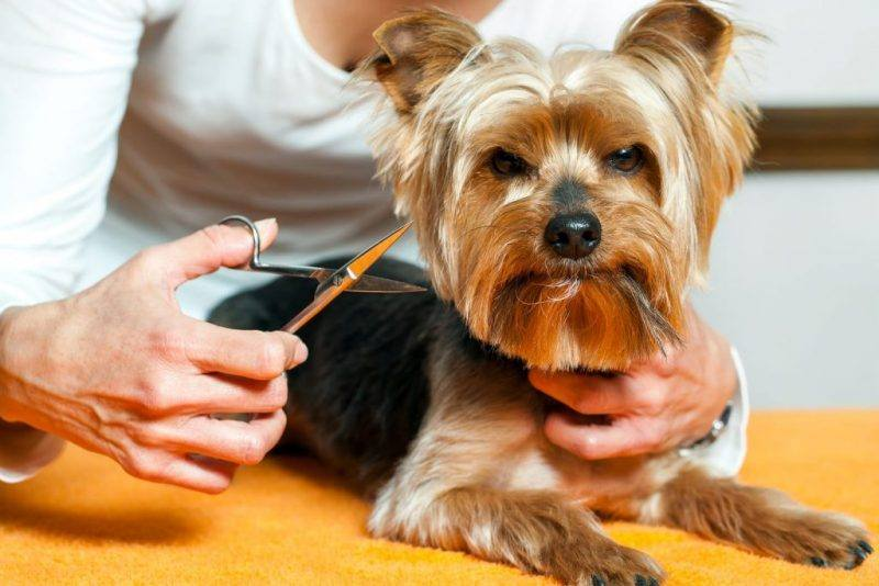 Grooming Pets | Dog Grooming | Cat Grooming | How To Groom Pet | The Daily Fluff | Wellbeing | Melbourne Pet Blog