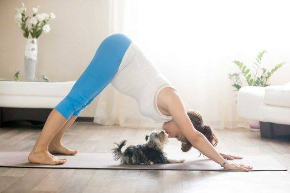 Yoga | Doga | Exercise | How To Exercise With Pets | The Daily Fluff | Melbourne Pet Blog