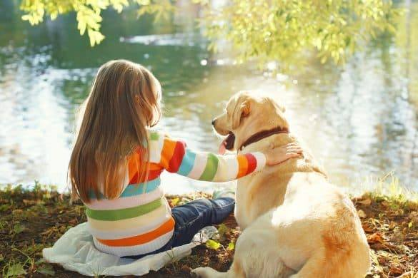 Dogs | Dog Breeds For Children | Pets for Families | Melbourne Pet Website | The Daily Fluff