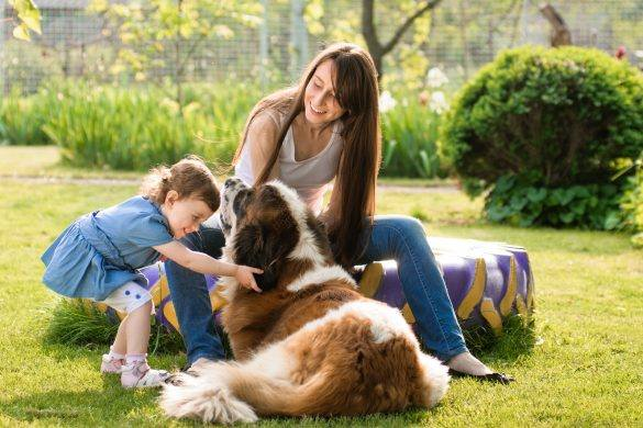 Pet Addiction | Fun | Signs You Love Your Pet | Pet Ownership | Melbourne Pet Blog | The Daily Fluff