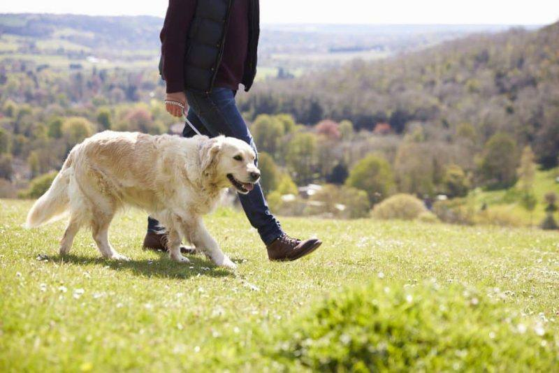 The Pooch Concierge | Dog Walking | Tips For Choosing A Dog Walker | Melbourne Pet Blog | The Daily Fluff