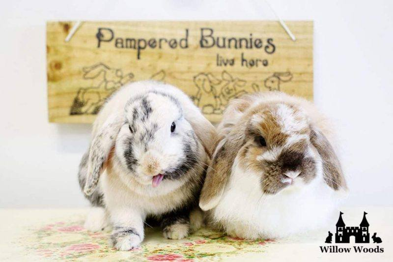 Willow Woods | Boarding | Bunny | Guinea Pig | Melbourne Pet Blog | The Daily Fluff