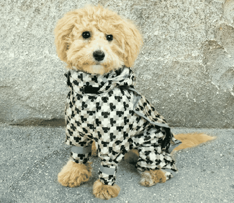 Hachi | Melbourne | Pet Clothing | Pet Accessories | Stylish Pet Clothing | The Daily Fluff