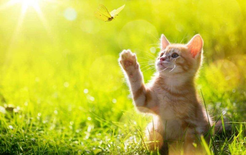 Springtime | Health | Tips | Looking After Pets | Warm Weather | Melbourne Pet Blog | The Daily Fluff