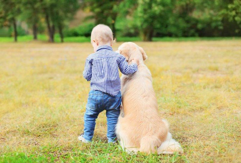 Dogs | Family | Dog Breeds For Kids | Melbourne Pet Blog | The Daily Fluff