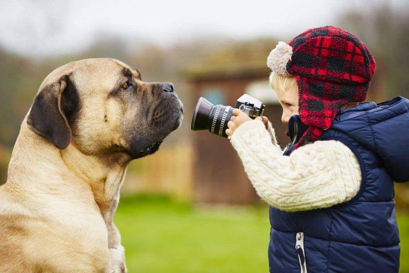 Photography | Pets | Tips | Fun | Melbourne Pet Blog | The Daily Fluff