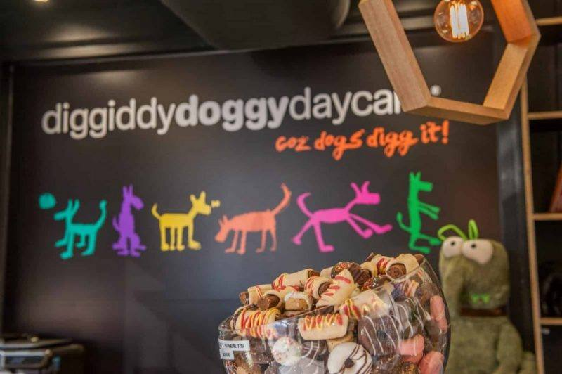 Diggiddydoggydaycare | Doggy Day Care | The Daily Fluff | Melbourne Pet Blog