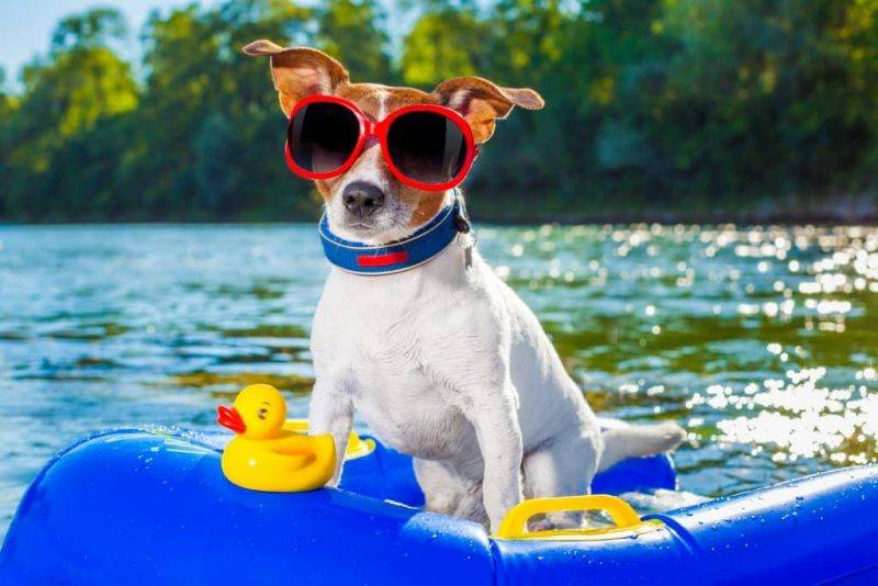 Keep Pets Cool | Summer | Tips | The Daily Fluff | Fun