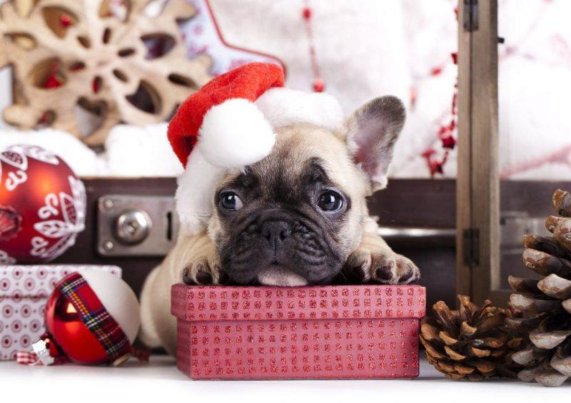 Christmas | Pets | Gift Guide | Shopping | The Daily Fluff