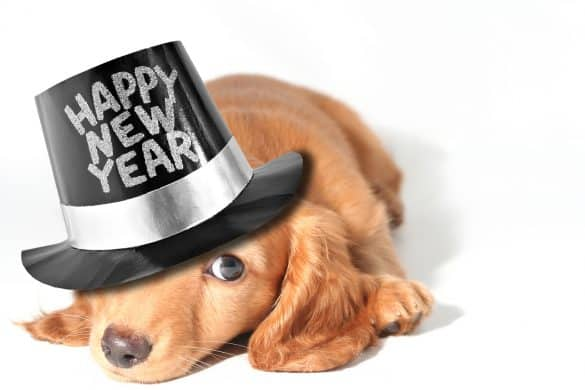 New Year's | Resolutions | Pets | The Daily Fluff | Melbourne Pet Blog