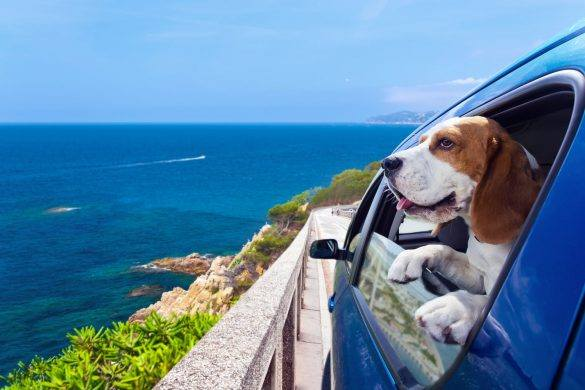 Australia Day | Travel | Pet | Celebrate | Party Tips | Fun | Melbourne | The Daily Fluff