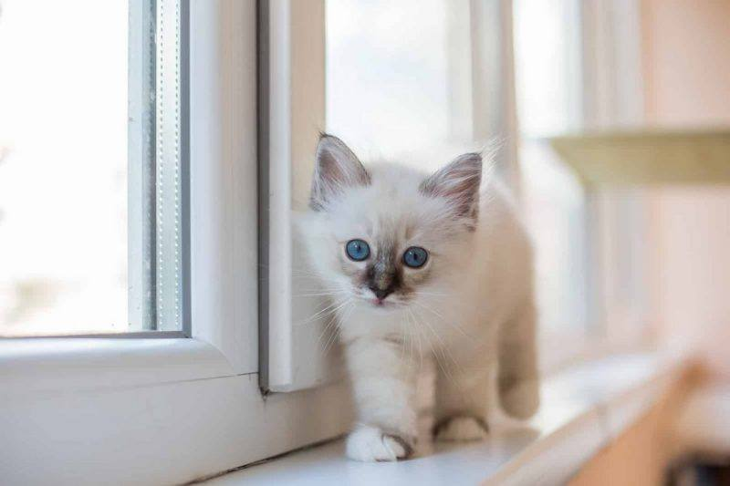 Perfect Life | Cat | Health | Happiness | Wellbeing |The Daily Fluff | Melbourne Pet Blog | Australian Pet Blog | Pet Owner