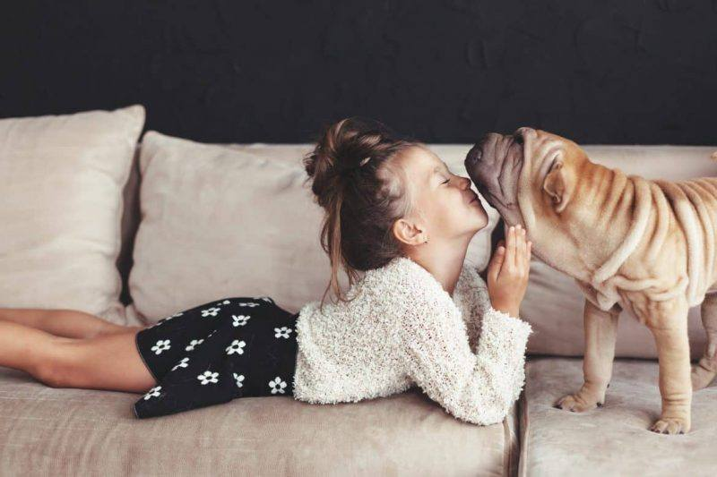 Pets | Love | Pet Owner | The Daily Fluff | Fun | Wellbeing | Melbourne Pet Blog