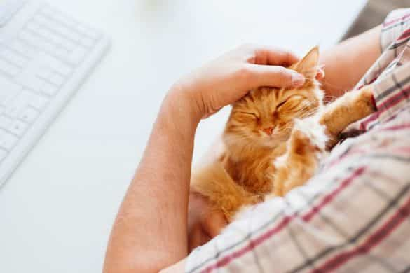 Pets | Workplace | Tips | The Daily Fluff | Melbourne Pet Blog | Australian pet Blog