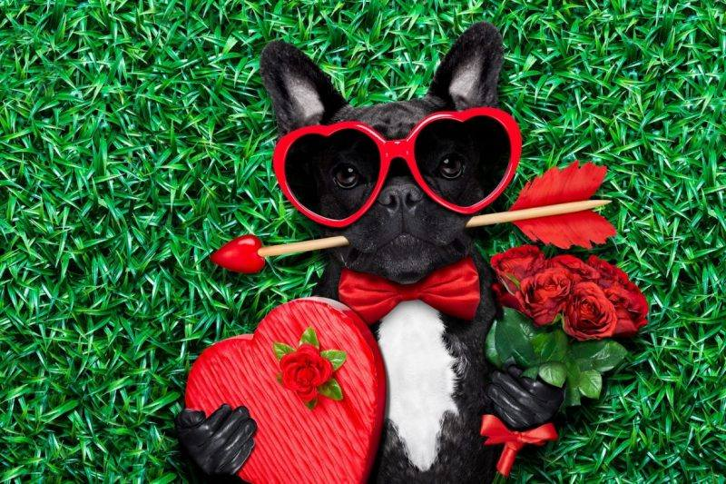 Valentine's Day | Date Ideas | Pet | The Daily Fluff