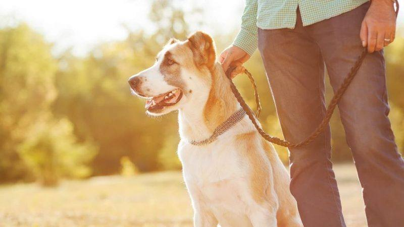Pets   Pet Lovers   Melbourne   Dog Parks   Wellbeing   Happiness   The Daily Fluff