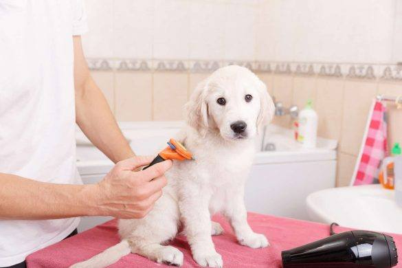 Pet | Pampering | Dog Spa | Dog Grooming | Melbourne | Australian Pet Blog | the Daily Fluff