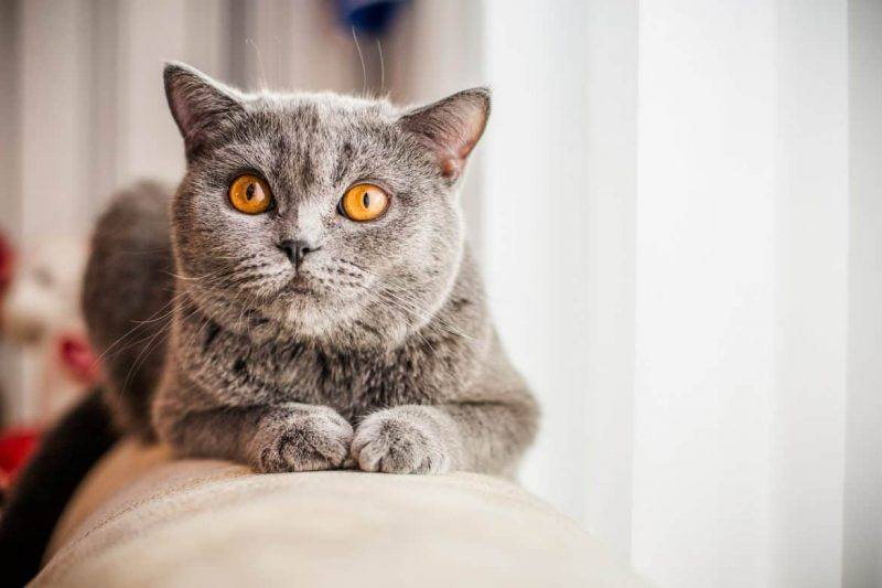 Cats | Cute | Pets | the Daily Fluff | Living With Cats