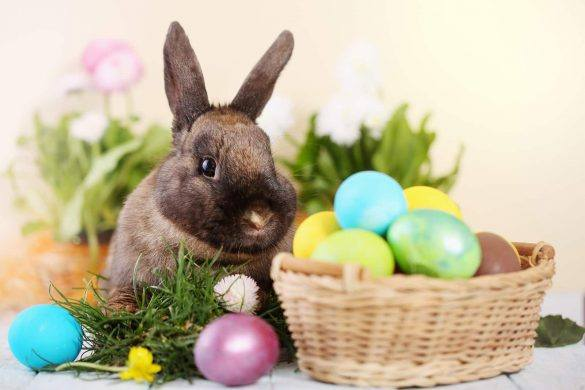 Pets | Safety | Easter | The Daily Fluff | Health | Australian Pet Blog