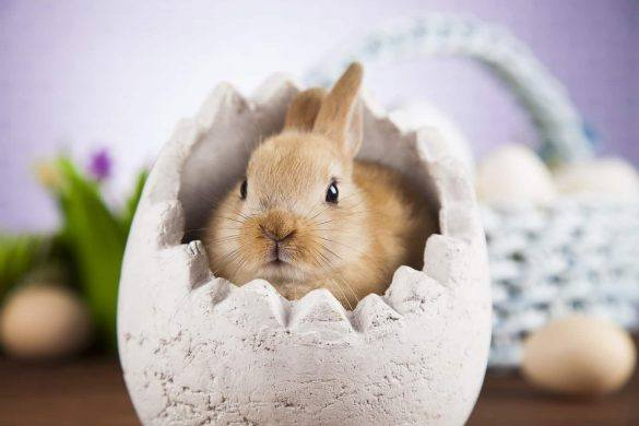 Rabbit | Easter | Fun Facts | The Daily Fluff