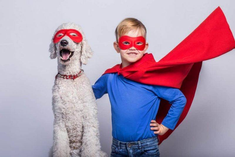 Animal Blog | Superheroes | The Daily Fluff | Pet Blogs Australia
